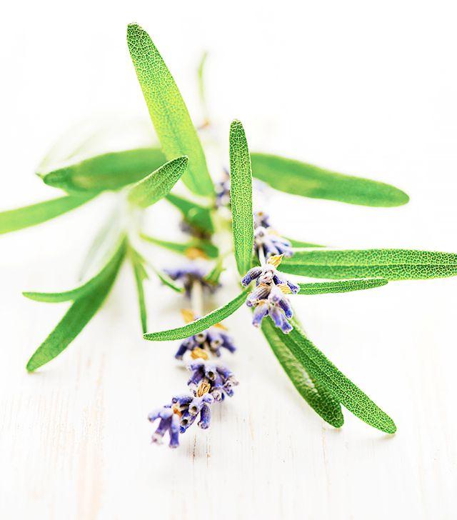 serum cây hương thảo tốt cho mái tóc mỏng
