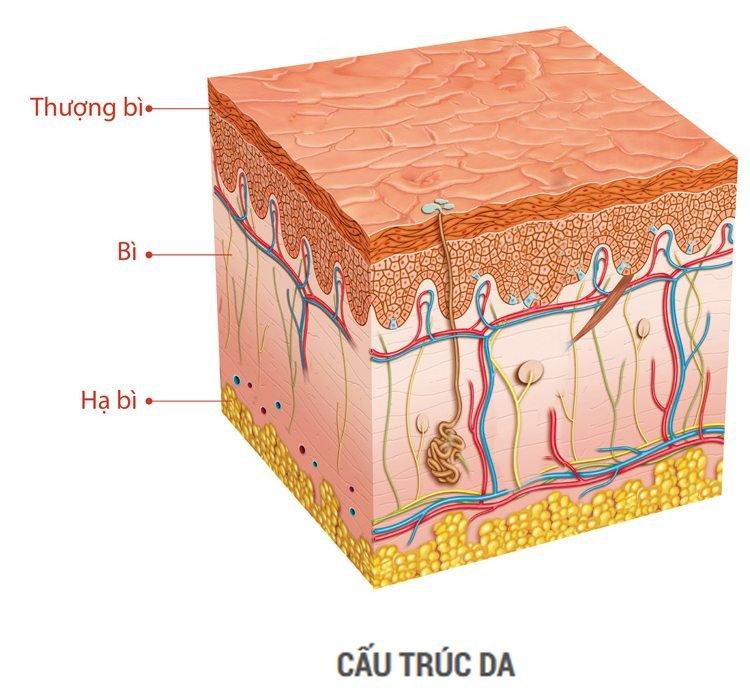 mặt nạ collagen tươi