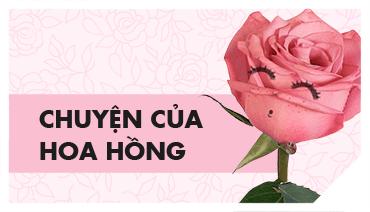 Câu chuyện hoa hồng