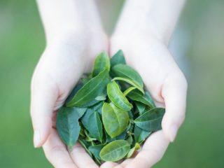 Học người Nhật rửa mặt bằng nước trà xanh để có làn da đẹp rạng rỡ