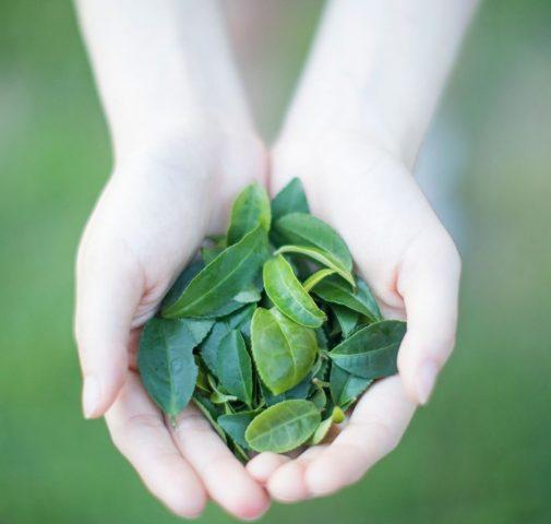 Học người Nhật cách làm sạch da mặt bằng trà xanh để có làn da sáng đẹp rạng rỡ