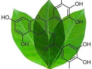 """4 """"cực phẩm"""" với khả năng chống oxy hoá nhất định phải có trong mỹ phẩm"""