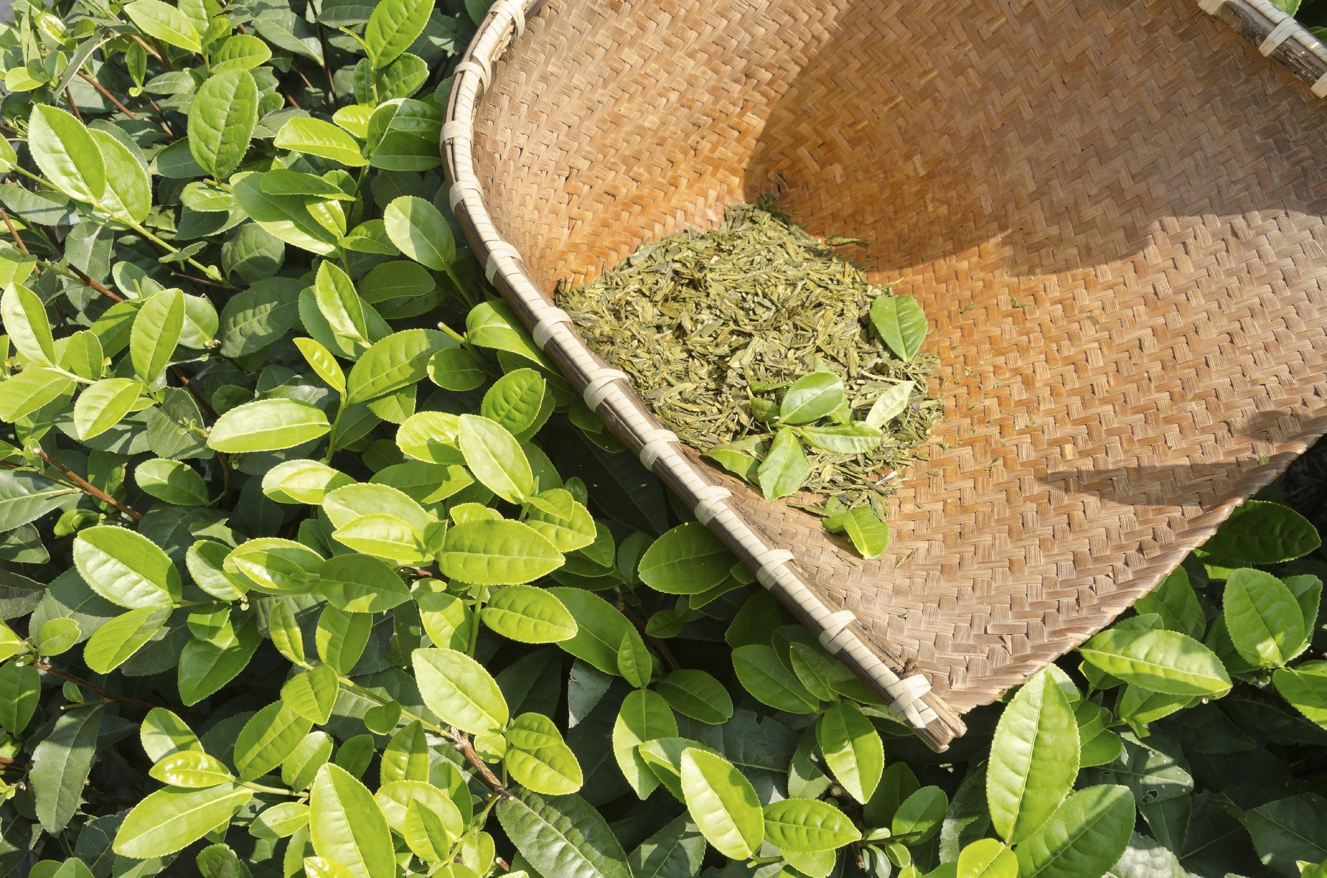 trà xanh trị mụn ẩn