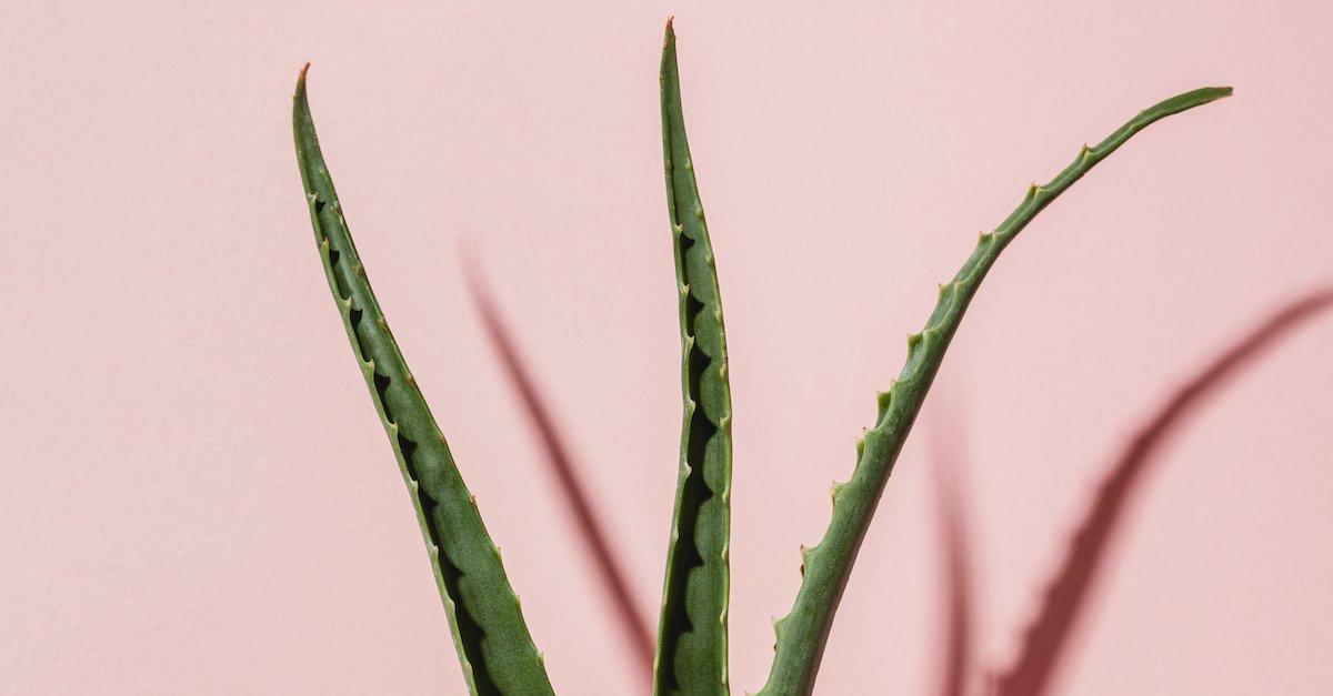 4 Lưu ý nhất định phải biết khi dưỡng da bằng nha đam