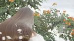 Điểm danh 5 loại thảo dược giúp tóc mau dài mềm mượt mà có thể bạn chưa biết!