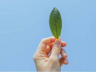 Sao phải chi tiền cho spa khi bạn có thể phục hồi tóc hư tổn tại nhà chỉ với trà xanh