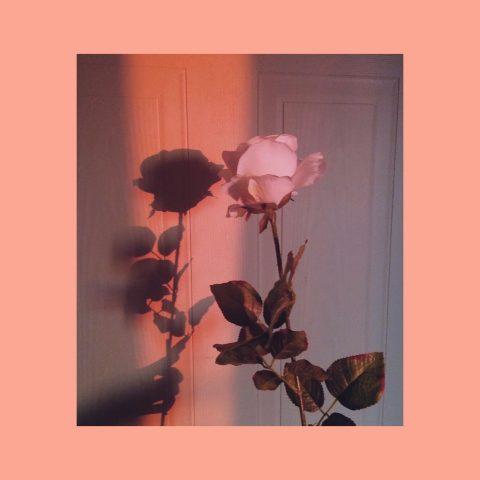 50 Shades Of Rose: Nốt hương quen thuộc nhưng không nhàm chán!