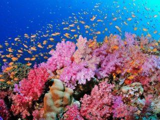 Điểm qua 4 kem chống nắng thân thiện với môi trường biển!