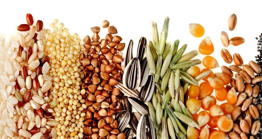 Tinh bột và chất xơ là carbohydrate phức tạp trong chế độ giảm cân low carb