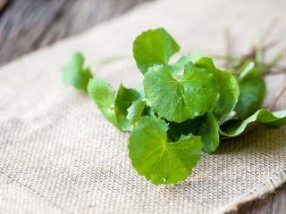 Chăm sóc da bằng rau má: cực rẻ và chất lượng