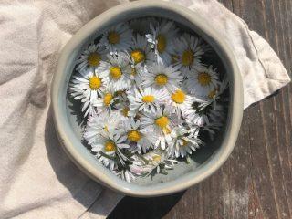 4 Lợi ích bất ngờ của hoa cúc đối với làn da của bạn