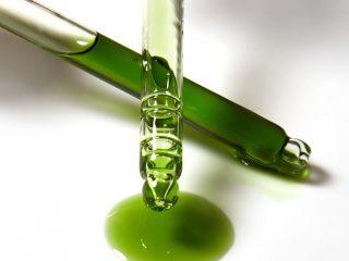 Vì sao bạn phải bổ sung dầu Tamanu vào chu trình chăm sóc da của mình?