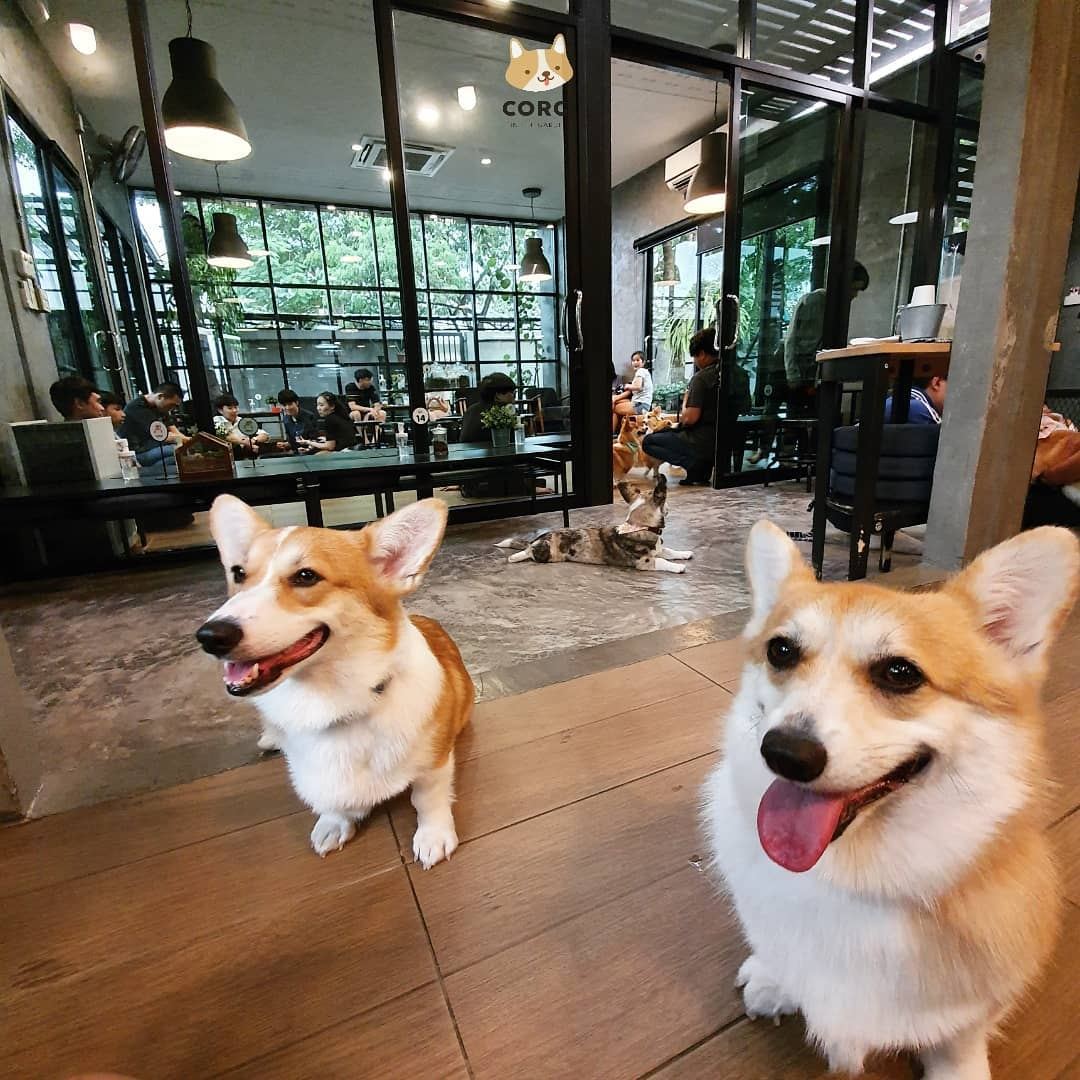"""""""Truyền Thái Y"""" Gấp: Tiệm Cafe Corfi có 14 boss Siêu Cấp Đáng Yêu"""