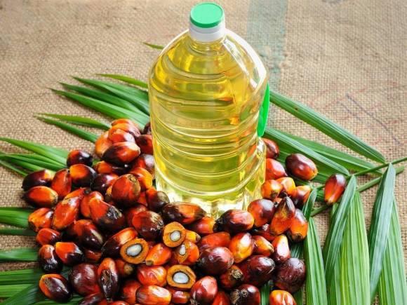 cách sản xuất dầu cọ