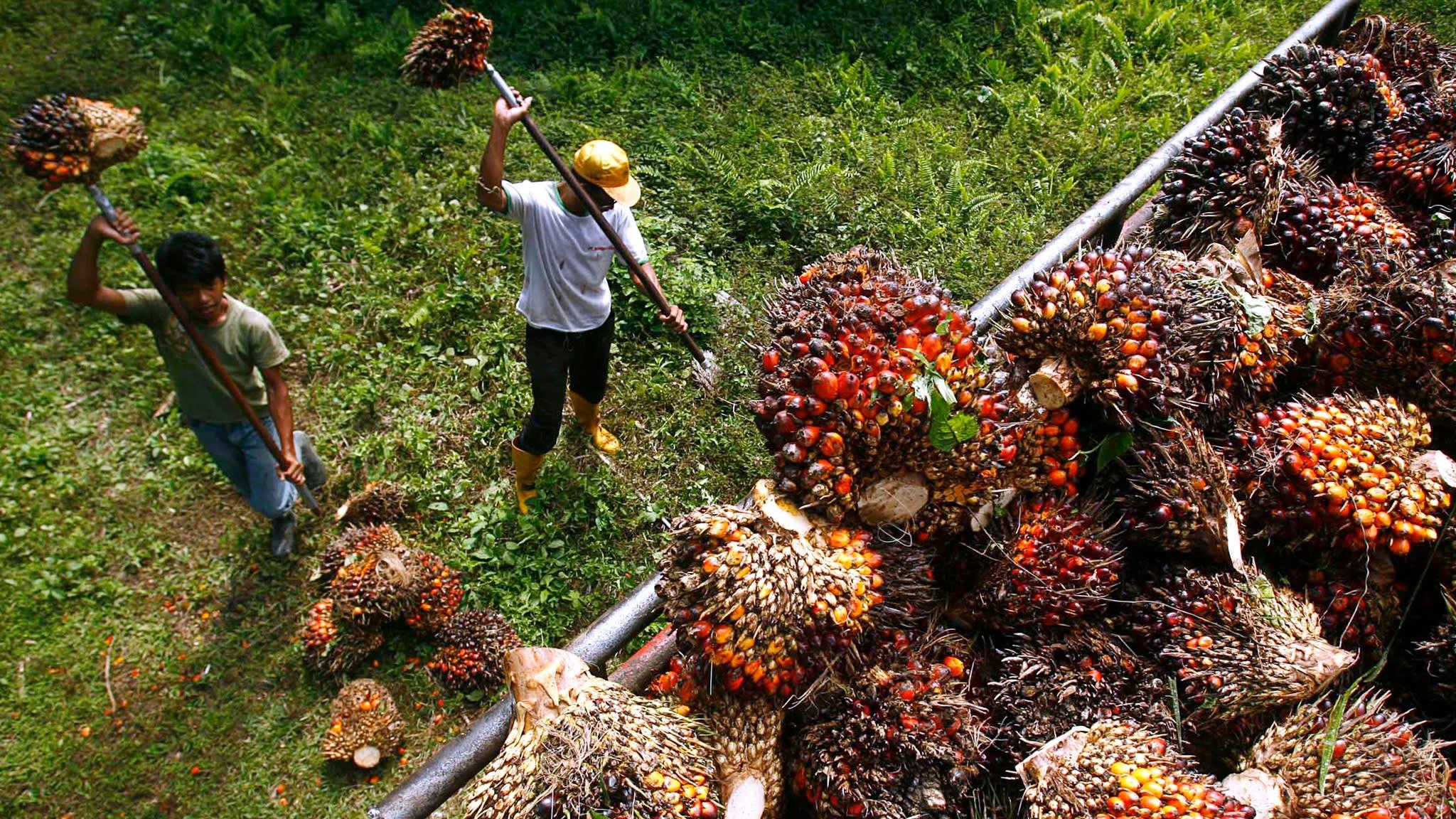 palm oil