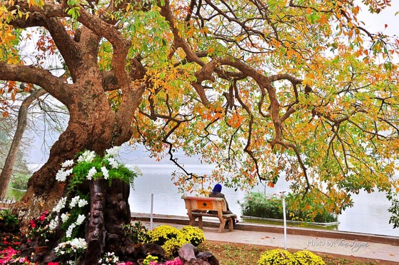 Image result for hà nội mùa thu đjep