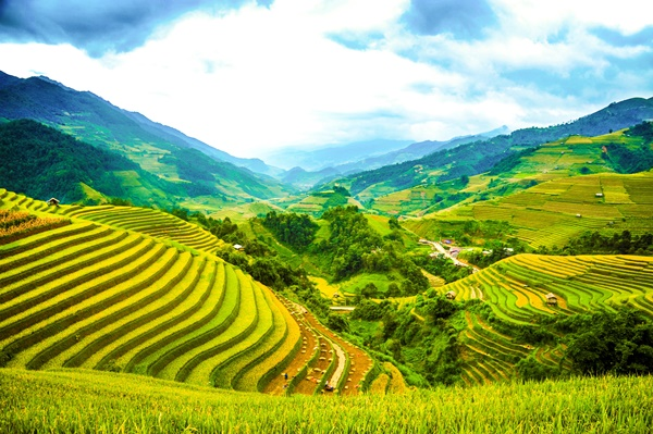 Image result for mù cang chải