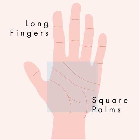 Thủy: lòng bàn tay dài và ngón tay thon dài, duyên dáng.