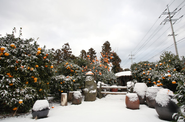 Kết quả hình ảnh cho jeju island snow