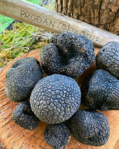 Truffles (nấm cục kim cương đen) nguyên liệu vô giá để có làn da hoàn hảo và sự thật bất ngờ