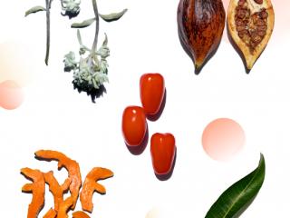Điểm danh 5 tinh chất chiết xuất từ thực vật mới nổi, bạn đã thử chưa?