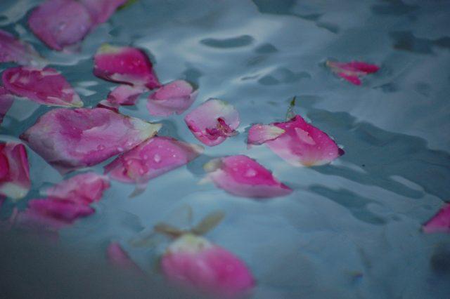 Bơ murumuru và cánh hoa hồng dưỡng ẩm cho da có tốt không?