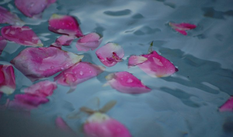 Hiệu quả dưỡng ẩm không ngờ của bơ murumuru và cánh hoa hồng có thể bạn chưa biết!