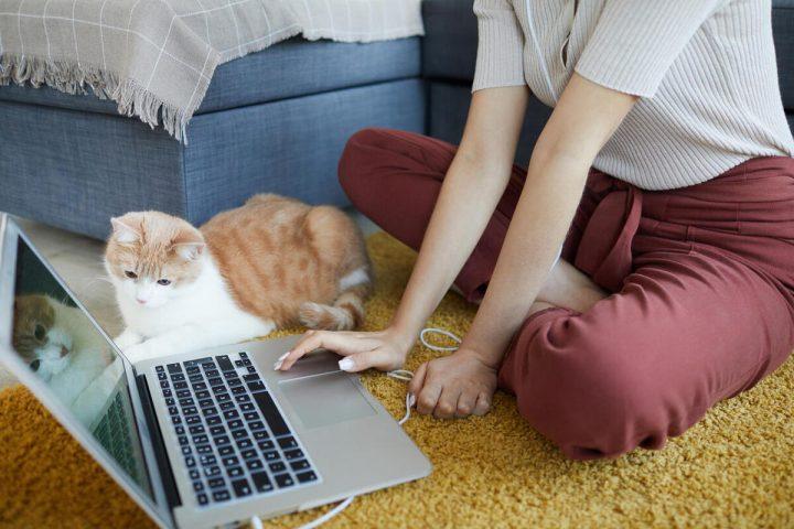 kỷ luật khi làm việc tại nhà