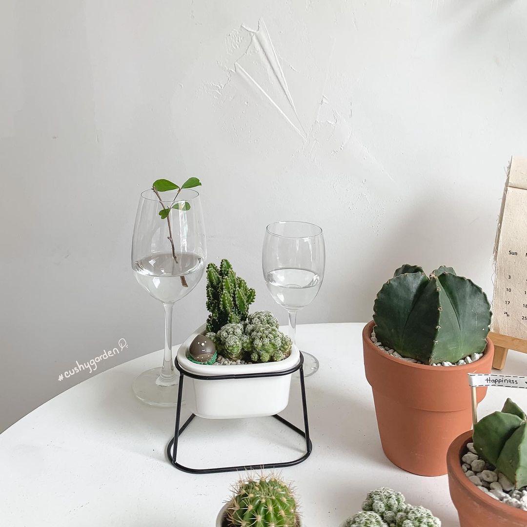 chọn cây xương rồng để trồng cây trong nhà
