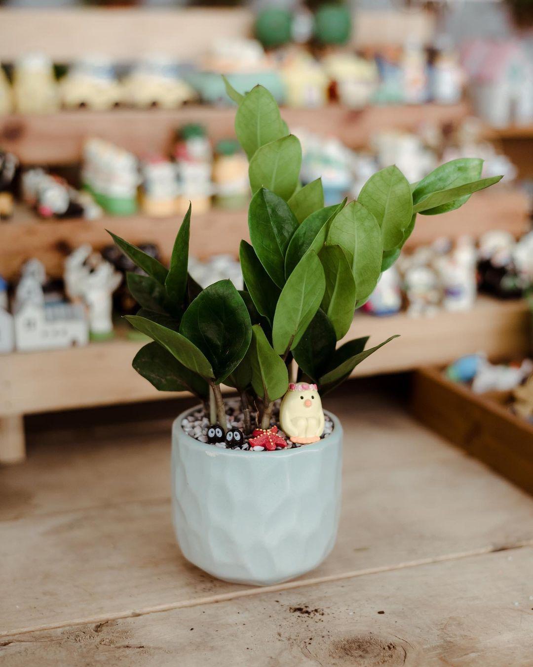 trồng cây trong nhà bạn