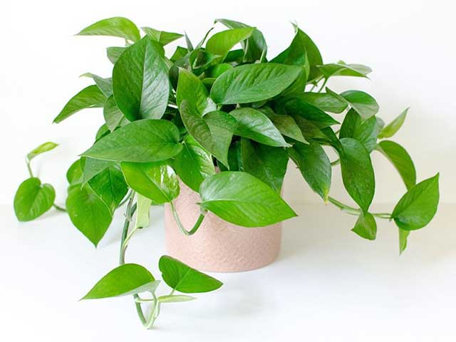 trồng cây trong nhà đơn giản