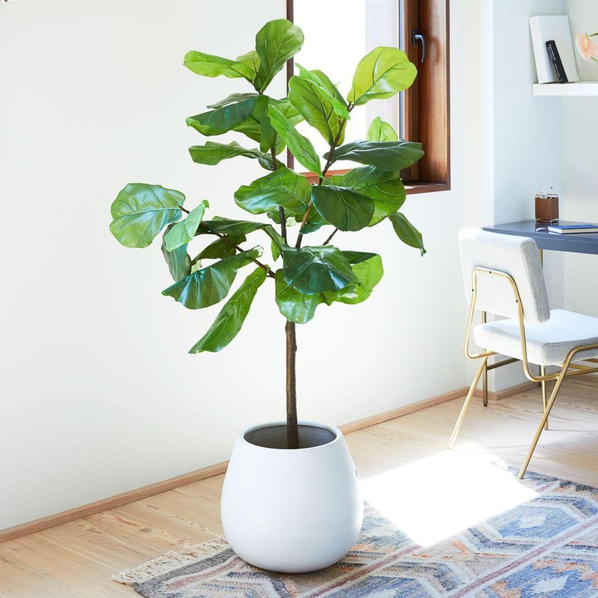 cây trong nhà
