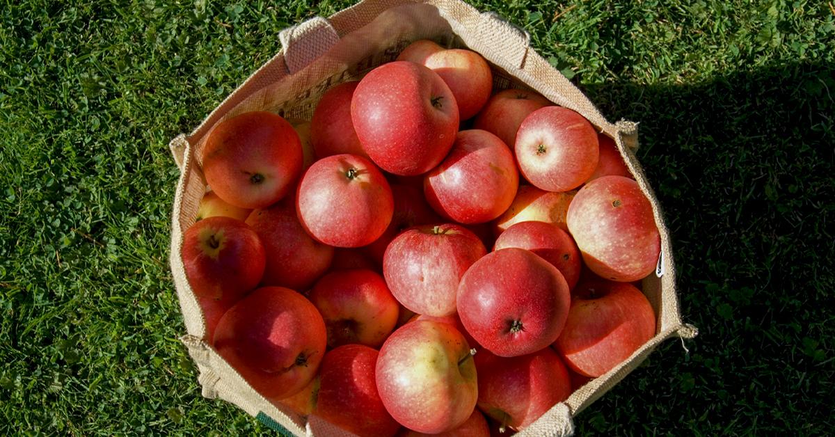 tác dụng của quả táo cần biết