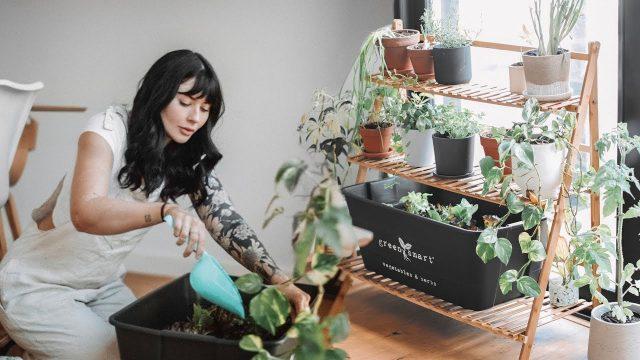 Top các loại cây trồng trong nhà giúp cải thiện không gian và sức khỏe của bạn