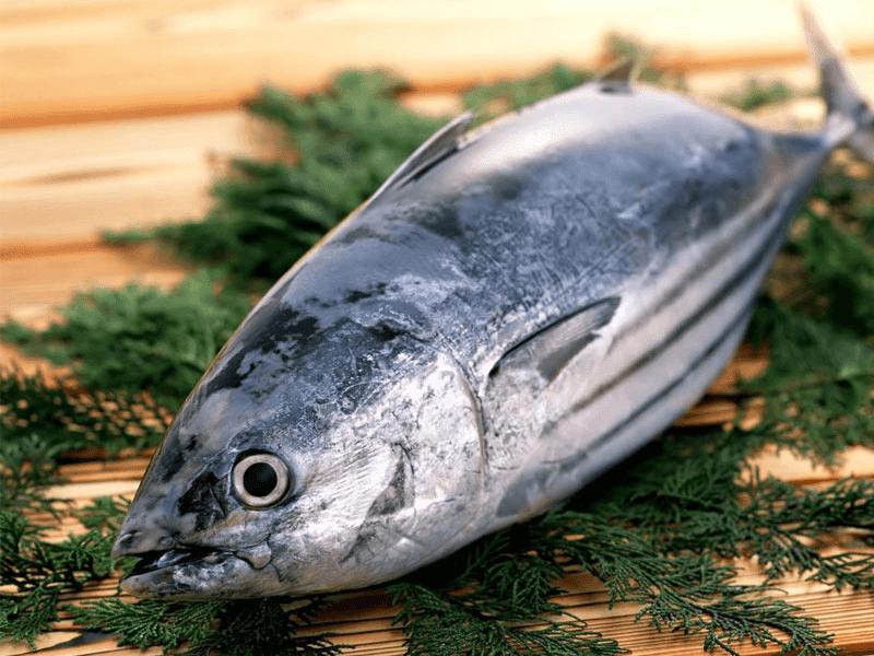 thực phẩm giảm cân với cá ngừ